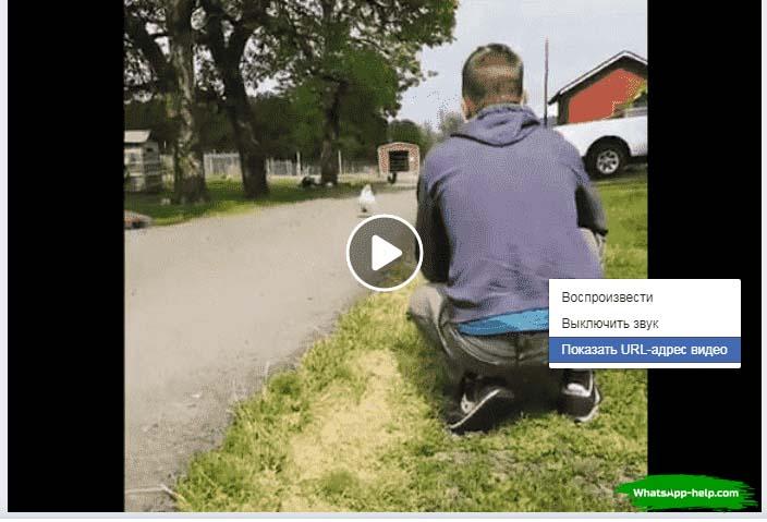 как скачать видео с фейсбука на ватсап